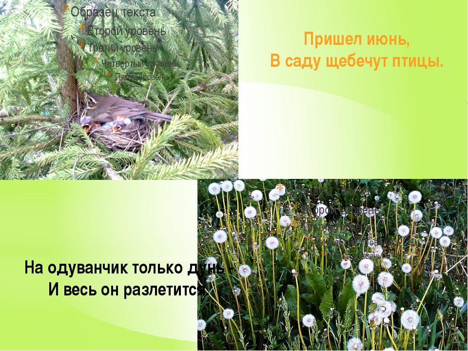 Пришел июнь, В саду щебечут птицы. На одуванчик только дунь - И весь он разл...