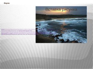 Фауна Ихтиофауна Азовского моря в настоящее время включает 103 вида и подвида
