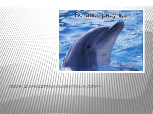 В бассейнах Черного и Азовского морей обитают крупные млекопитающие. Это дель...