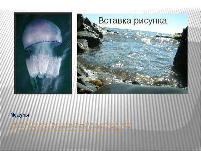 Медузы Чаше всего в море встречаются медузы с названиями аурелия и корнерот....