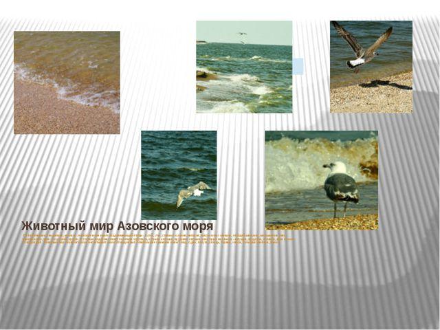 Животный мир Азовского моря По берегам рек и водоемов, на косах Азовского мо...