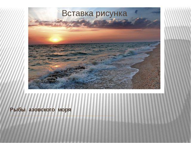 Рыбы азовского моря В Азовском море обитает более 70 различных видов рыб (в...