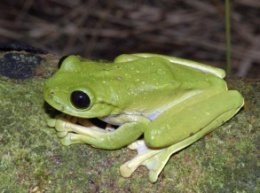 В Папуа-Новой Гвинее обнаружили 50 неизвестных видов живых организмов