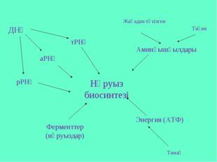 Нәруыз биосинтезі тРНҚ аРНҚ Аминқышқылдары Энергия (АТФ) Ферменттер (нәруызда