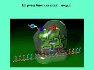 Нәруыз биосинтезінің моделі