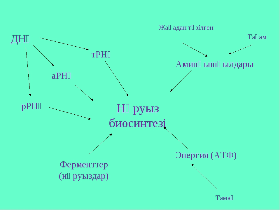 Нәруыз биосинтезі тРНҚ аРНҚ Аминқышқылдары Энергия (АТФ) Ферменттер (нәруызда...