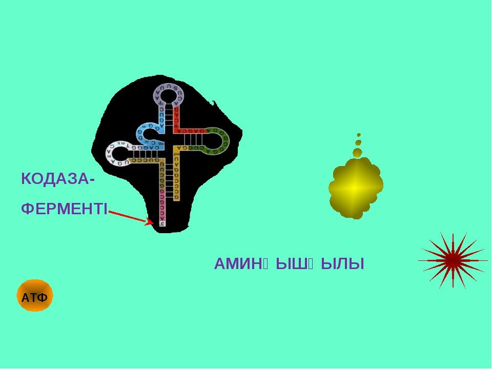 АМИНҚЫШҚЫЛЫ КОДАЗА- ФЕРМЕНТІ АТФ
