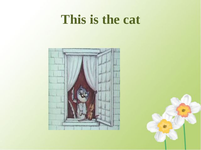 This is the cat