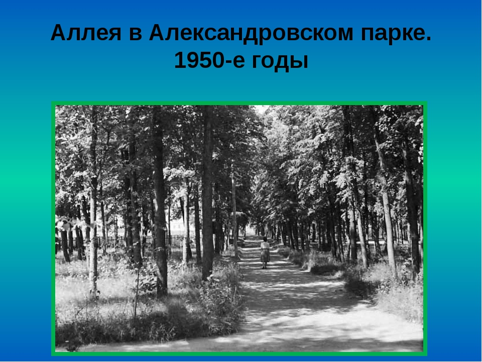 Аллея в Александровском парке. 1950-е годы