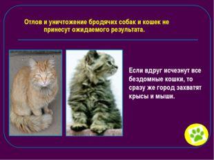 Отлов и уничтожение бродячих собак и кошек не принесут ожидаемого результата.