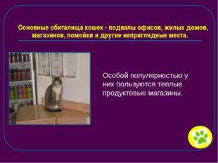 Основные обиталища кошек - подвалы офисов, жилых домов, магазинов, помойки и