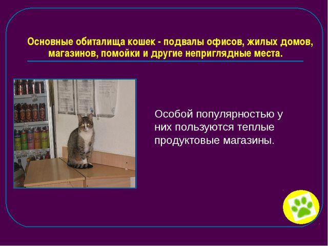 Основные обиталища кошек - подвалы офисов, жилых домов, магазинов, помойки и...