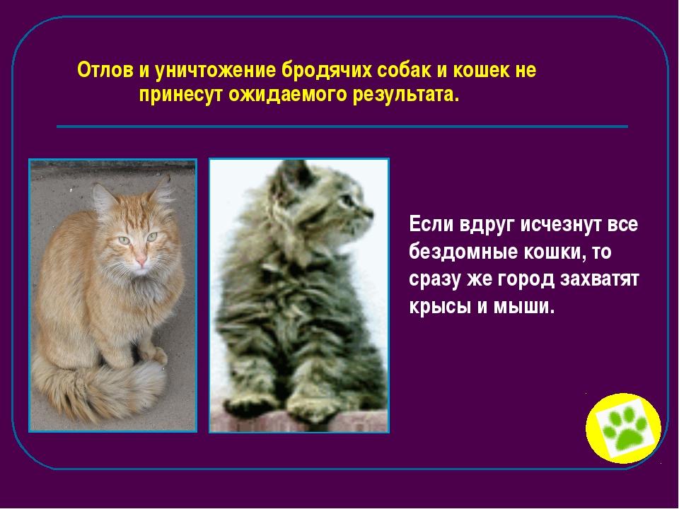 Отлов и уничтожение бродячих собак и кошек не принесут ожидаемого результата....