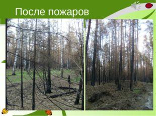 После пожаров
