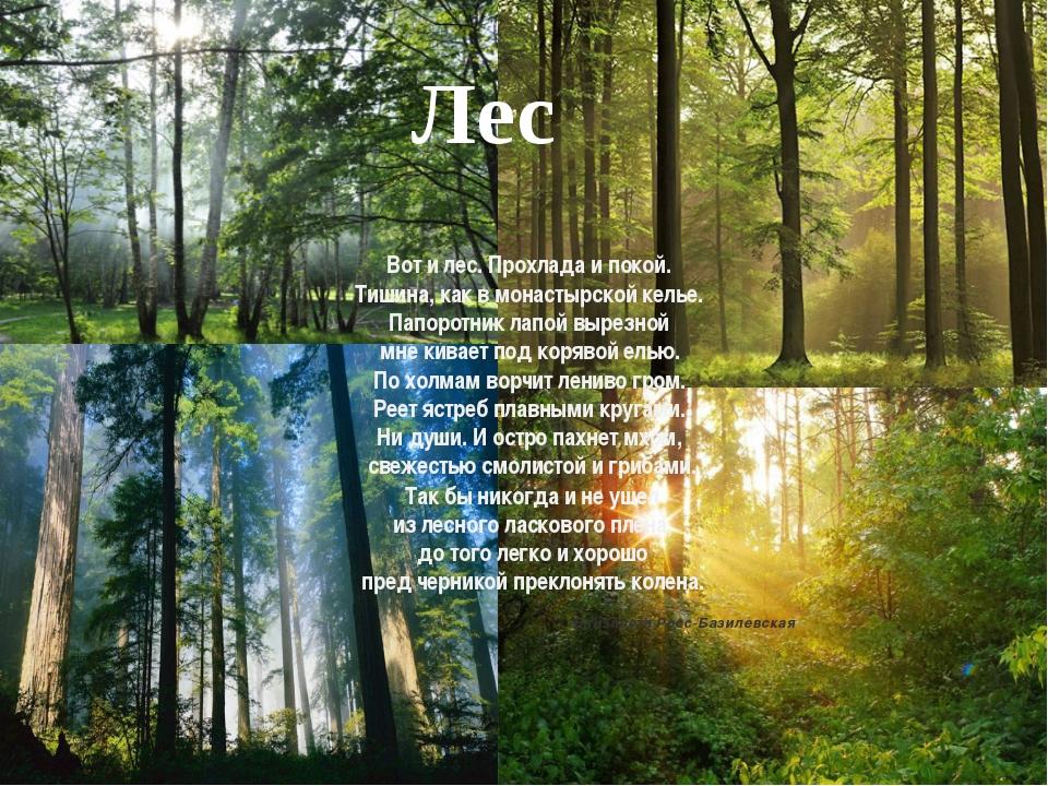 Лес Вот и лес. Прохлада и покой. Тишина, как в монастырской келье. Папоротник...