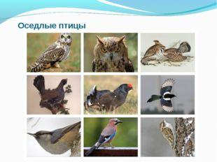 Оседлые птицы