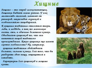 Хищные – это отряд млекопитающих. Хищники бывают самые разные. У них множеств