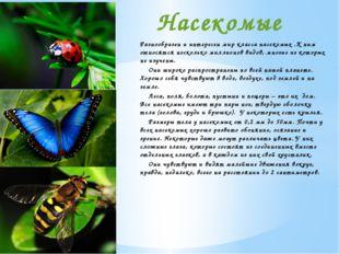 Разнообразен и интересен мир класса насекомых .К ним относятся несколько милл