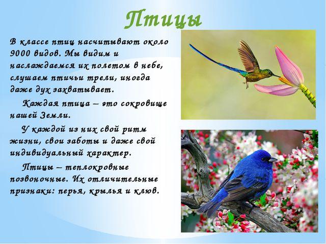 В классе птиц насчитывают около 9000 видов. Мы видим и наслаждаемся их полето...