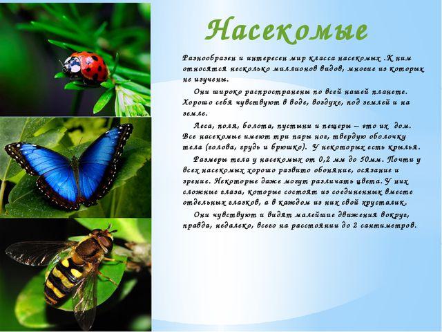 Разнообразен и интересен мир класса насекомых .К ним относятся несколько милл...