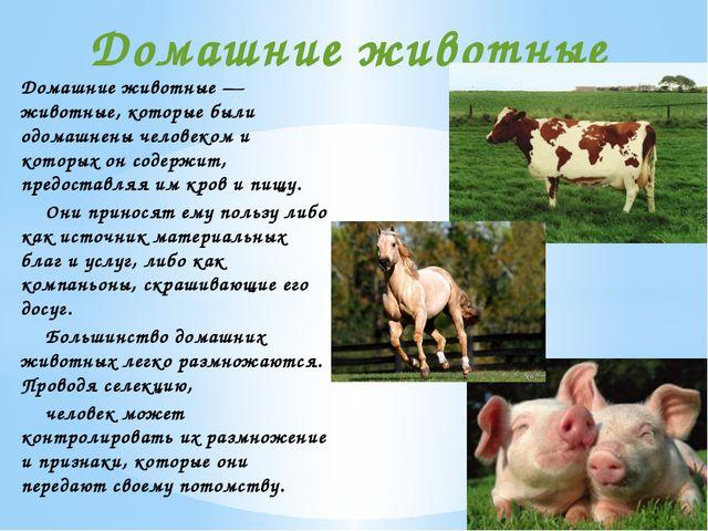 Домашние животные — животные, которые были одомашнены человеком и которых он...