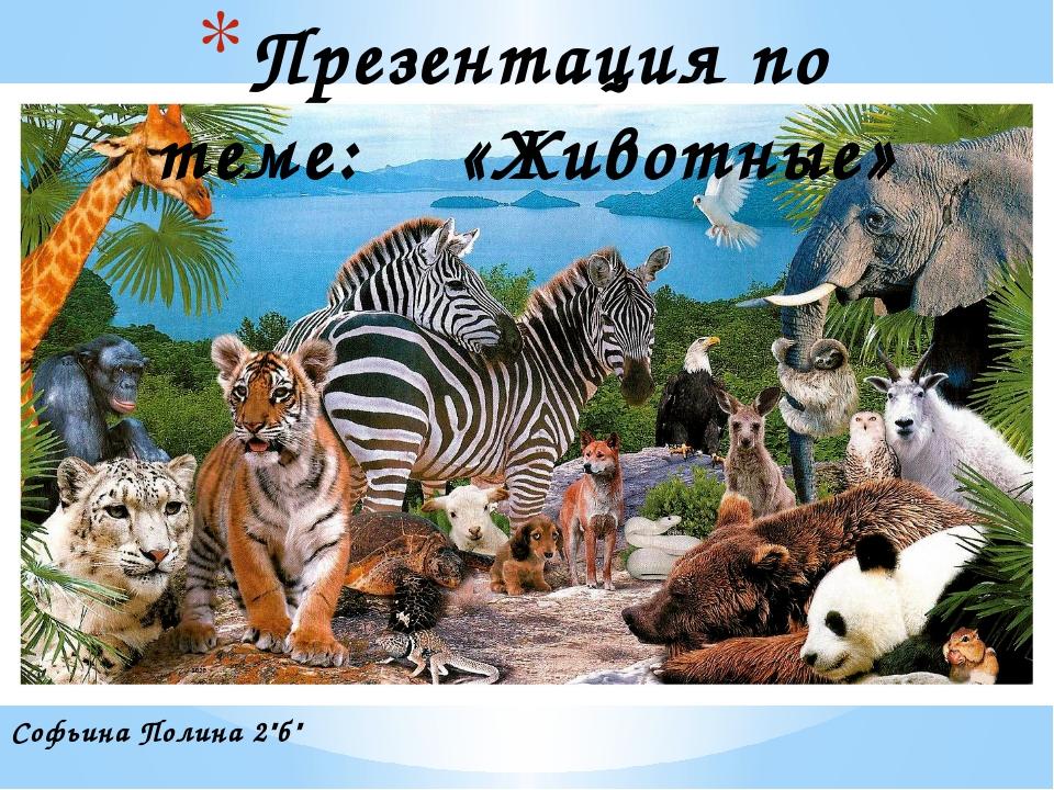 """Софьина Полина 2""""б"""" Презентация по теме: «Животные»"""