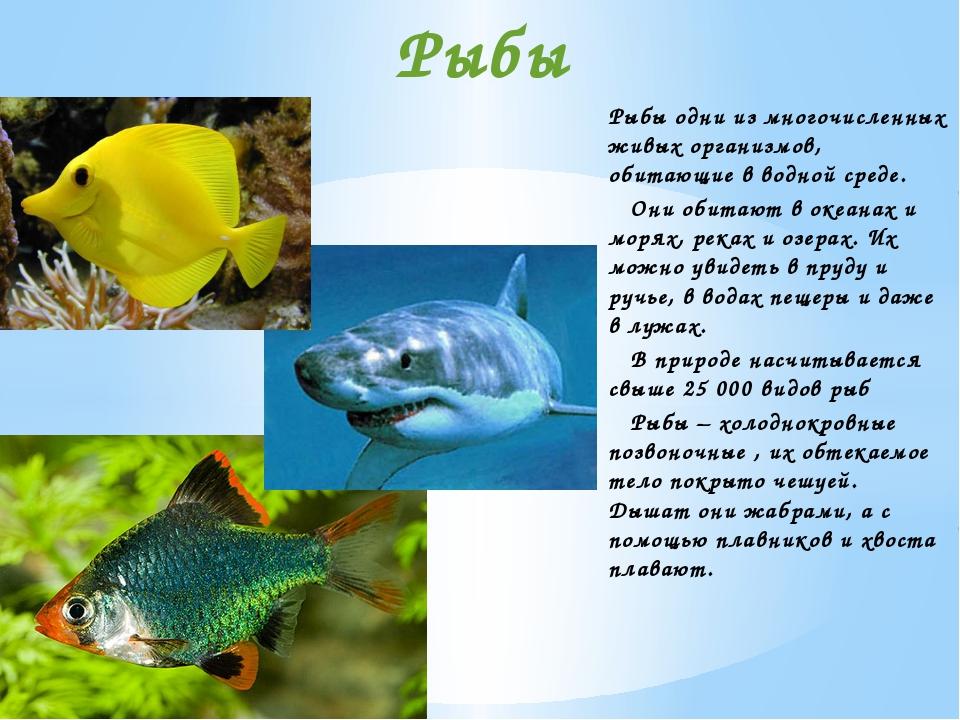Рыбы одни из многочисленных живых организмов, обитающие в водной среде. Они о...