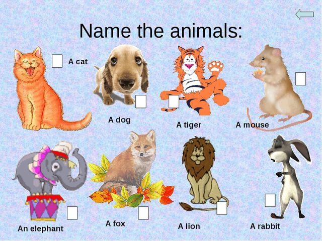 Name the animals: A cat A dog A tiger A mouse An elephant A fox A lion A rabbit