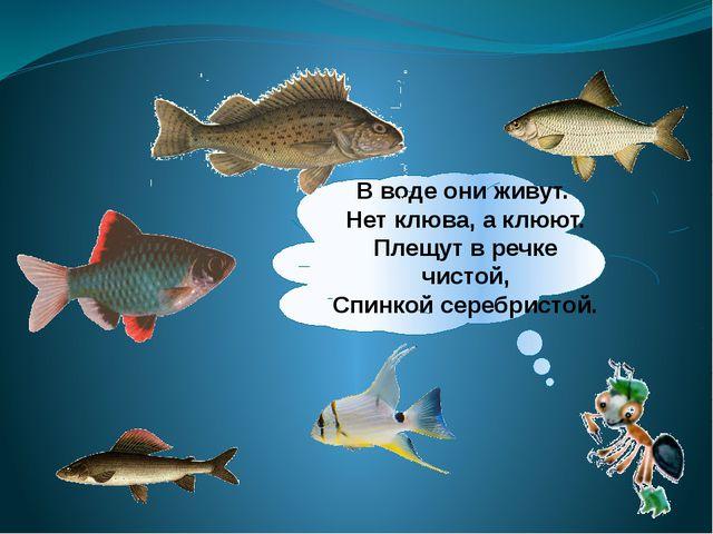 В воде они живут. Нет клюва, а клюют. Плещут в речке чистой, Спинкой серебрис...