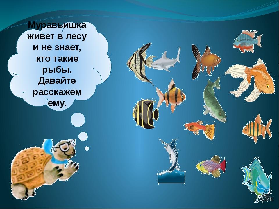Муравьишка живет влесу инезнает, кто такие рыбы. Давайте расскажем ему.