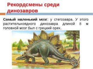 Рекордсмены среди динозавров Самый маленький мозг: у стегозавра. У этого раст