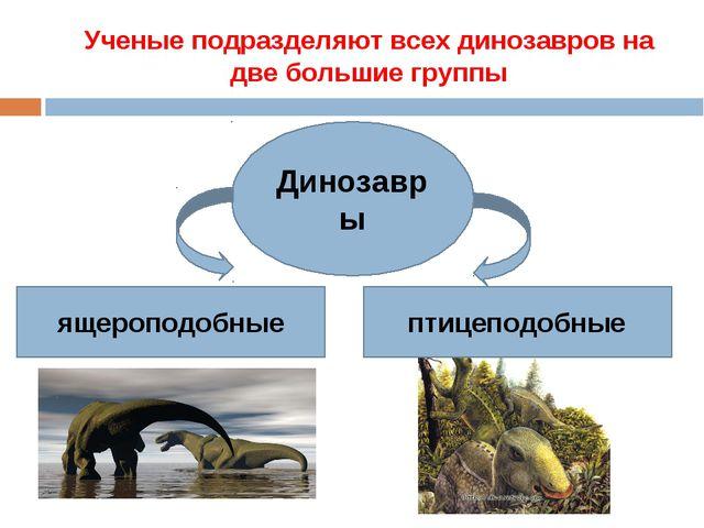 Ученые подразделяют всех динозавров на две большие группы Динозавры ящероподо...
