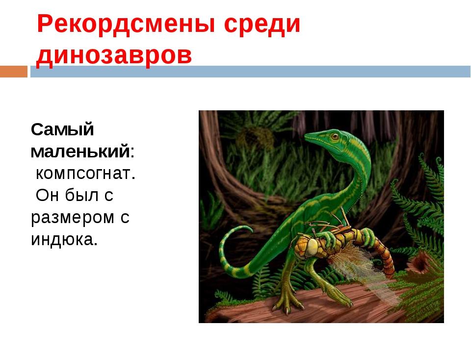 Рекордсмены среди динозавров Самый маленький: компсогнат. Он был с размером с...