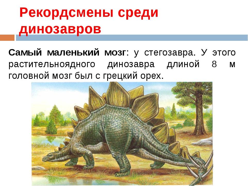 Рекордсмены среди динозавров Самый маленький мозг: у стегозавра. У этого раст...