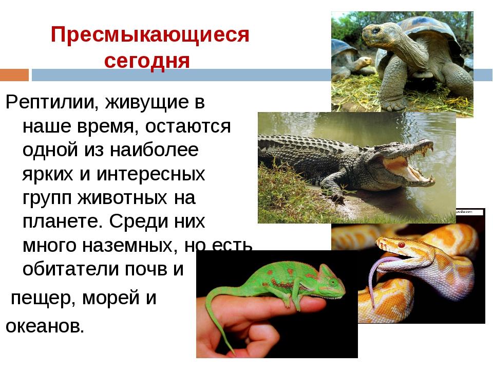 Пресмыкающиеся сегодня Рептилии, живущие в наше время, остаются одной из наиб...