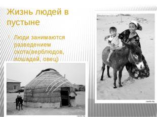 Жизнь людей в пустыне Люди занимаются разведением скота(верблюдов, лошадей, о