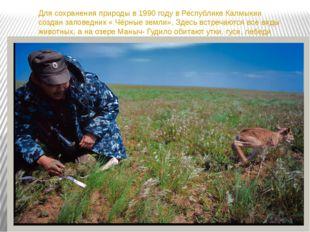 Для сохранения природы в 1990 году в Республике Калмыкии создан заповедник «