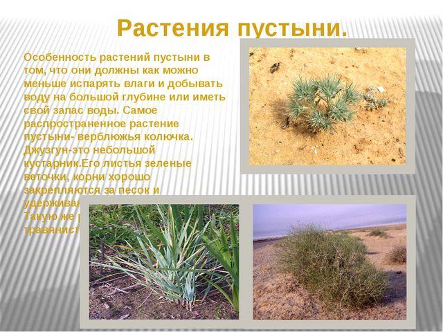 Растения пустыни. Особенность растений пустыни в том, что они должны как можн...