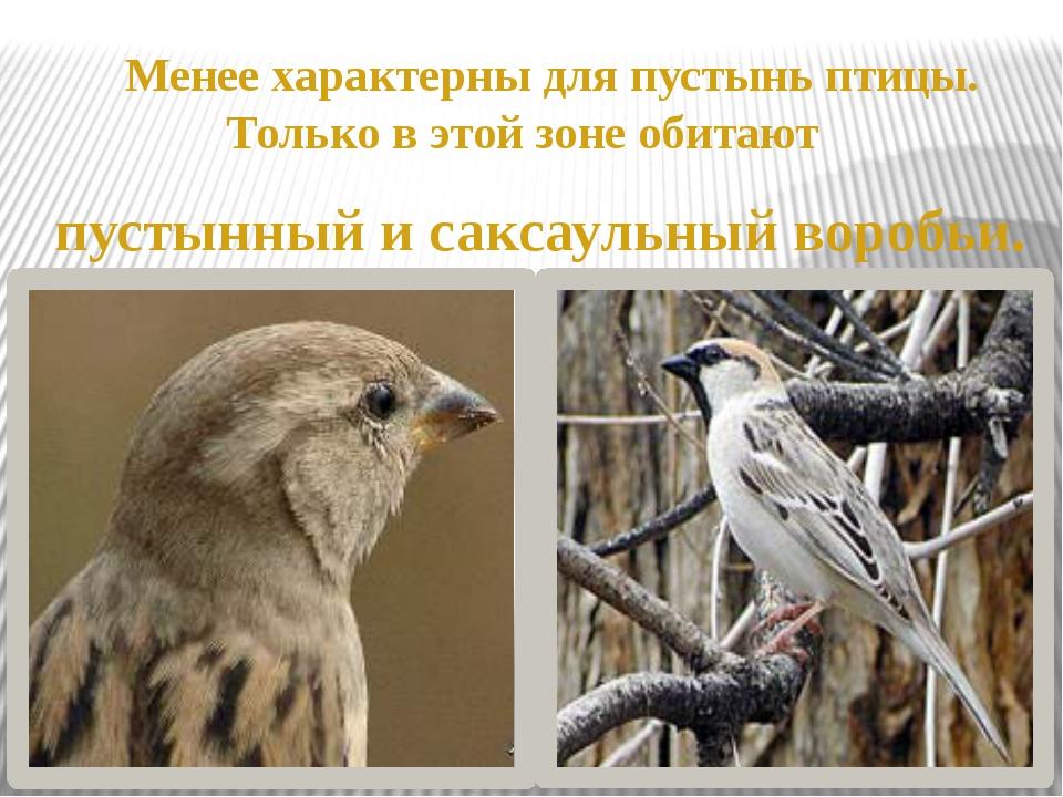 Менее характерны для пустынь птицы. Только в этой зоне обитают пустынный и с...