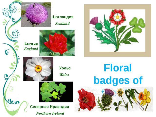 Floral badges of the UK Северная Ирландия Northern Ireland Шотландия Scotland...