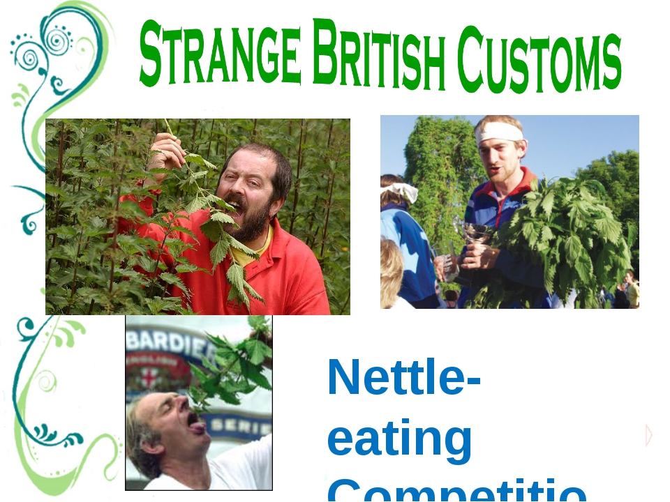Nettle-eating Competition There's a nettle-eating contest in Britain every ye...