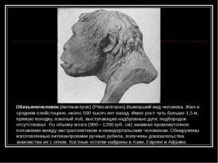 Обезьяночеловек (питекантроп) (Pitecantropus).Вымерший вид человека. Жил в с