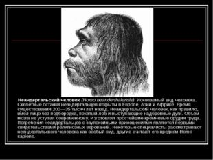 Неандертальский человек (Homo neanderthalensis). Ископаемый вид человека. Ск