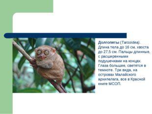 Долгопяты (Tarsoidea). Длина тела до 16 см, хвоста до 27,5 см. Пальцы длинны