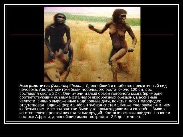 Австралопитек (Australopithecus). Древнейший и наиболее примитивный вид чело...