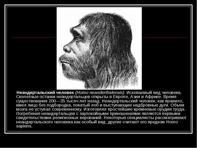Неандертальский человек (Homo neanderthalensis). Ископаемый вид человека. Ск...