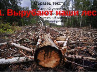 1. Вырубают наши леса