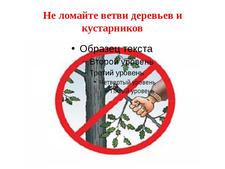 Не ломайте ветви деревьев и кустарников