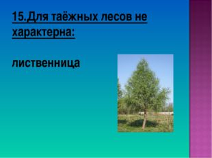 15.Для таёжных лесов не характерна: лиственница