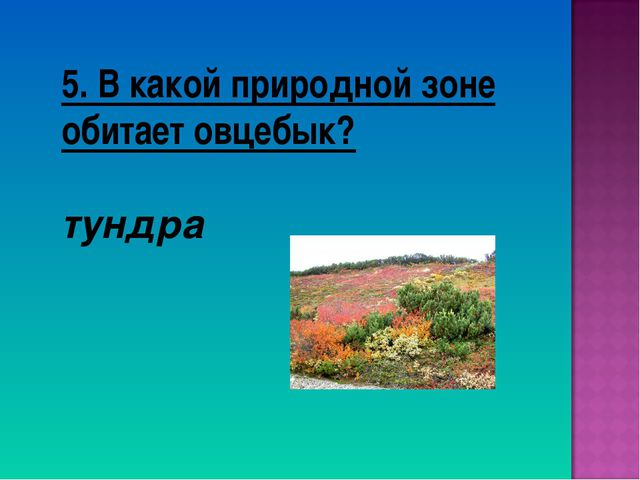 5. В какой природной зоне обитает овцебык? тундра